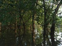 Guyana 15 - flooded forest